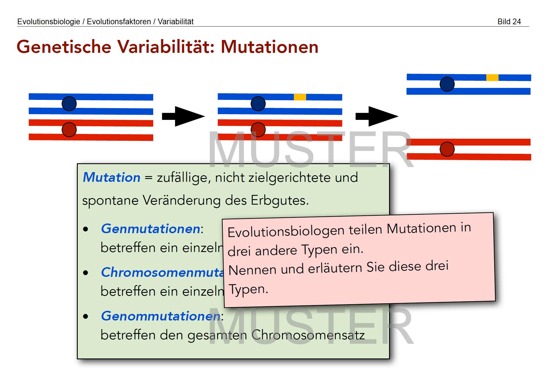 Modifikatorische Variabilität