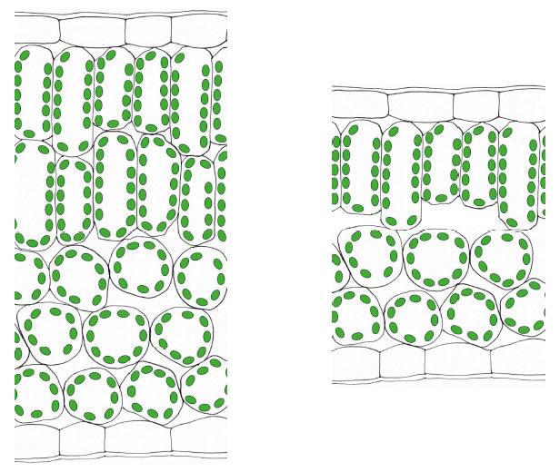 zelle gewebe organismus. Black Bedroom Furniture Sets. Home Design Ideas