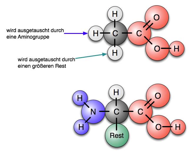 Aminosäure-Rassendatierung Definition