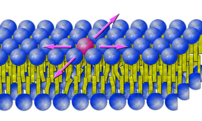 Lipid Doppelschicht