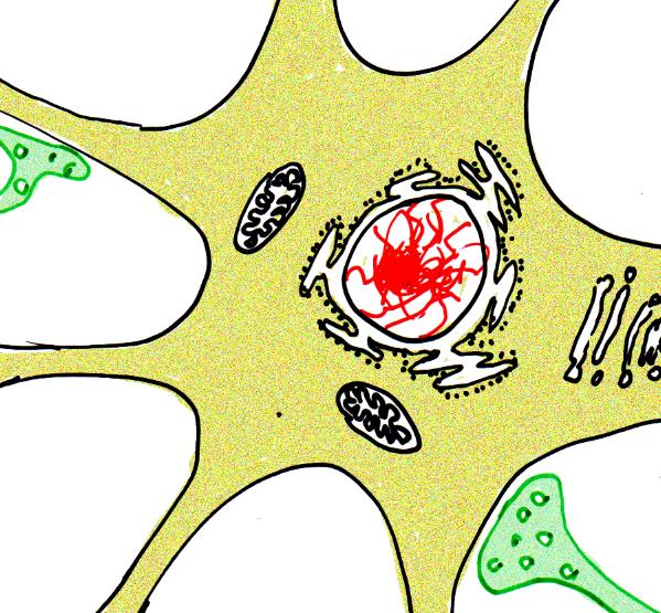 Grafik: Bau einer Nervenzelle